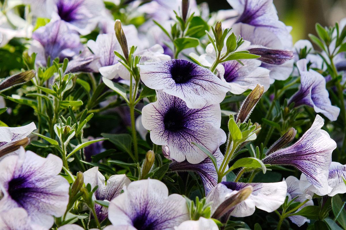 Jakie Kwiaty Na Balkon I Taras Domogrodwnetrzepl